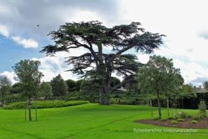 Wunderschöner Garten ...