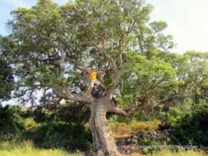 2013_Korsika_082