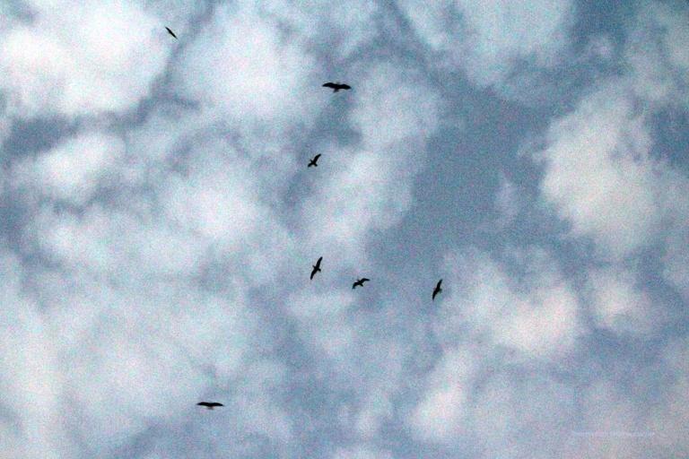 """... die Vögel steigen auf und wollen mich verjagen - Erinnerungen an den Hitchcockfilm """"Die Vögel"""" werden wach ..."""