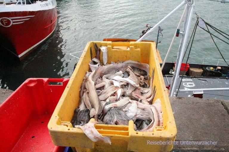 Fischabfälle als Köder ...