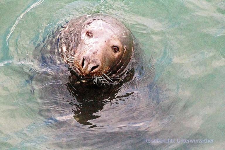 Seal - Seehunde ....