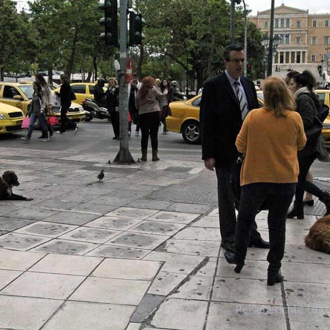 Überall freilaufende Hunde ...
