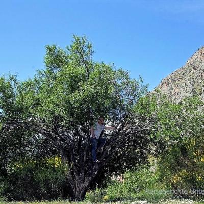 Was macht Rupert auf dem Baum?