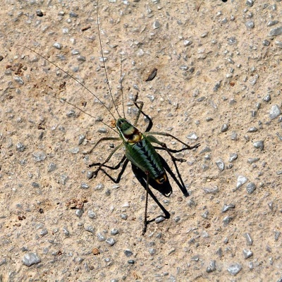 Unbekannter Käfer aus Delphi ...