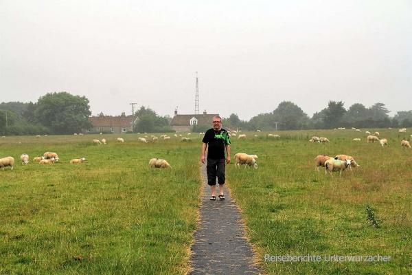 ... der Regen störte doch ein bisschen und auf der Schafwiese kam es zum Duell: Ich oder ...
