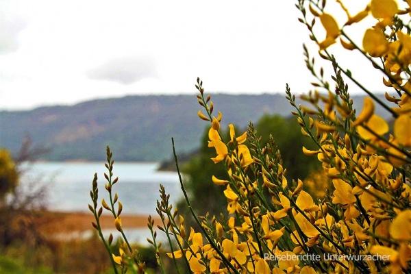 Blütenpracht am Lac de Saint-Croix ...