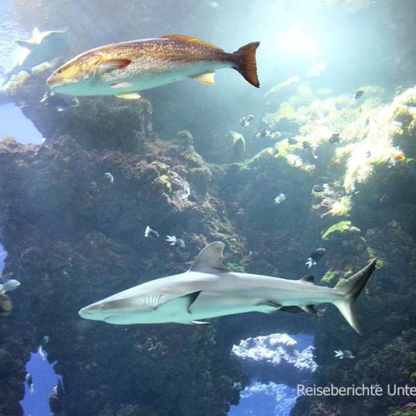 Das sehenswerte Aquarium von Monaco ...