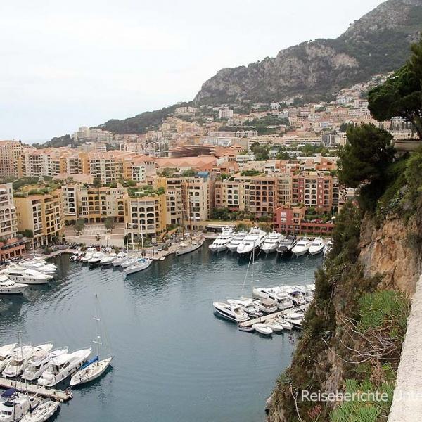 Der alte Hafen in Monaco mit Möwe ...